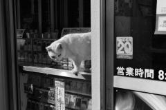 タバコ屋の猫