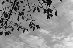 シルエットと空